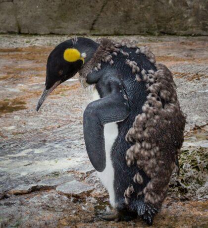 Moulting Penguin Sticker