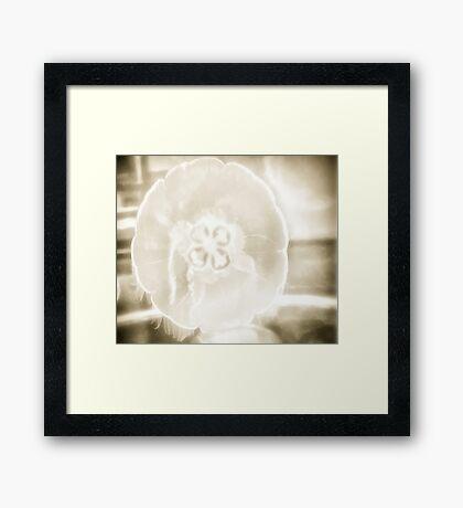 Moon Jelly Fish Framed Print