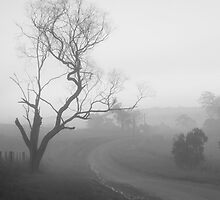 Yarra Valley in Black and White : Suzanne Phoenix by Suzanne Phoenix