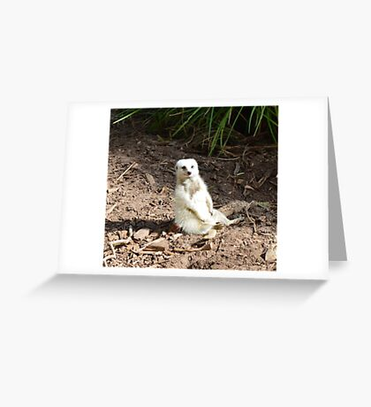 Cheeky White Meerkat Smiling For The Camera Greeting Card