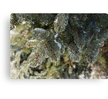 Mother Nature's Christmas Decorations - Pine Branches Canvas Print
