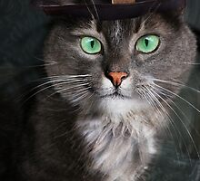 Steampunk Funny Cute Cat 3 by LouiseCantwell
