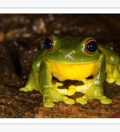A Happy Frog! Sticker