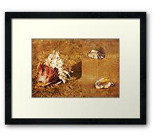 Natures Sculptures Framed Print
