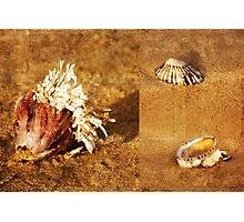 Natures Sculptures Photographic Print