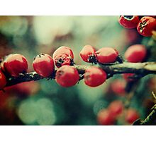 Red Winter Berries Photographic Print