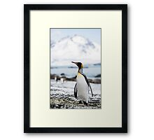 Royal Bay King Framed Print