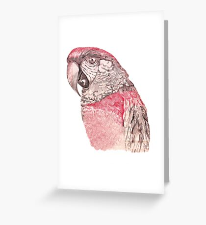 Red Macaw Greeting Card