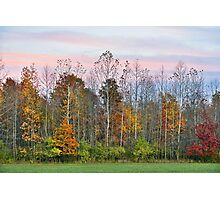 Autumn Wood at Sunset Photographic Print