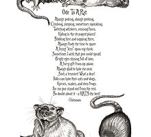Ode To A Rat by Mayra Boyle