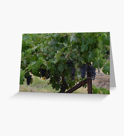 Vineyard, grapes Greeting Card