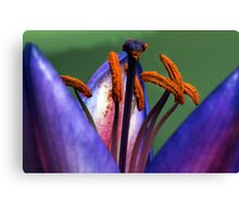 Abstract Lily. Canvas Print