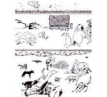 Dog Run Photographic Print