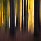 Sunlight at the edge of the woods by Martin Griffett
