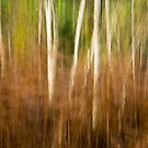 Silver Birch in Autumn Ferns by Martin Griffett