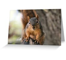 How did you climb up here?  Greeting Card
