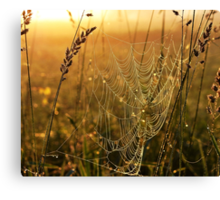 one golden morning Canvas Print
