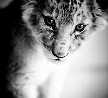 Lion Cub Portrait by Beth Wold