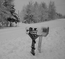 Mourning in Winter #3 (Rural Mailbox) (Breadalbane, Prince Edward Island, Canada December 2008) by Edward A. Lentz