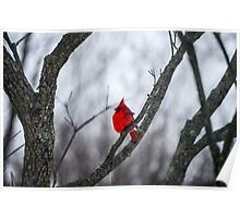 Cardinal In A Snow Storm Poster