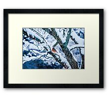 Female Cardinal In Snowy Tree Framed Print