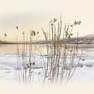Okanagan Glod by John Poon