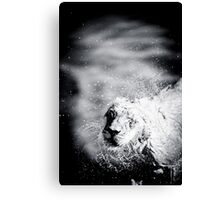 Lion in water Canvas Print