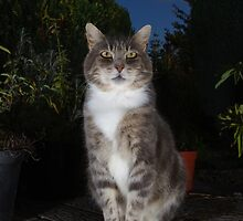 Tabby cat sat on patio at night by turniptowers