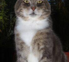 Tabby cat sat on patio at night Sticker