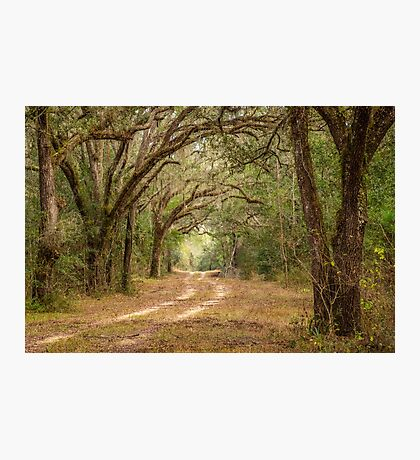 The Wagon Trail Photographic Print