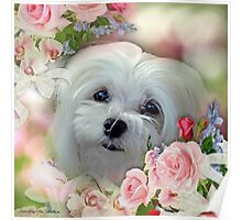 Snowdrop the Maltese - The Face that Melts my Heart Poster