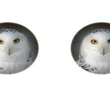 Snowy Owl / Schnee-Eule by Thomas F. Gehrke