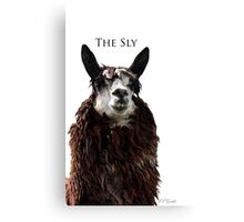 The Sly Canvas Print