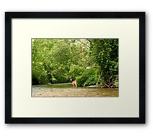 Battenkill Deer Framed Print