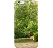Battenkill Deer iPhone Case/Skin