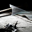 5.11.2014: Dead Bird II by Petri Volanen