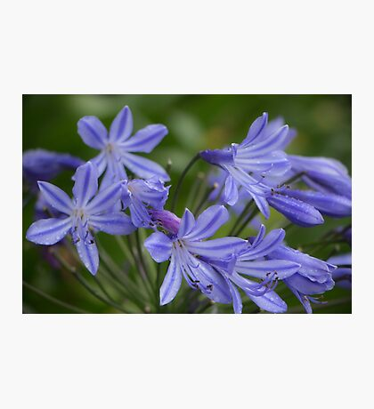 Apaganthus in the Rain Photographic Print