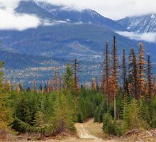 Logging Road by Tracy Friesen