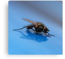 Blue Fly  Canvas Print