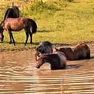 """""""The Horses 5: Camera Shy""""... prints and products by © Bob Hall"""