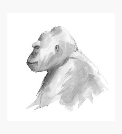 Gorilla.  Photographic Print
