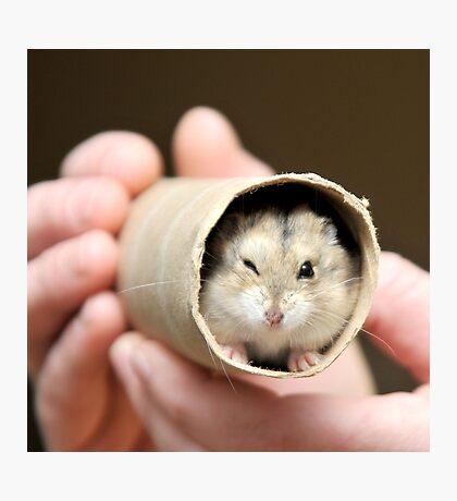 Winking Hamster Photographic Print