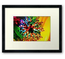 Bromeliad color wheel Framed Print