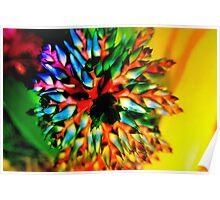 Bromeliad color wheel Poster