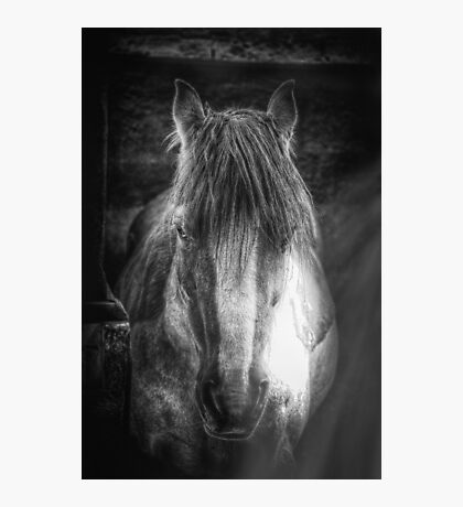 Stable Photographic Print