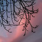Branches in the Setting Sun by Heather Friedman
