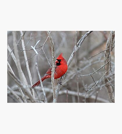 A bright spot in the winter woods Photographic Print