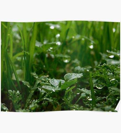 Raindrops in the Meadow Poster