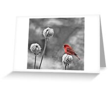 Please God I Need Spring! Greeting Card