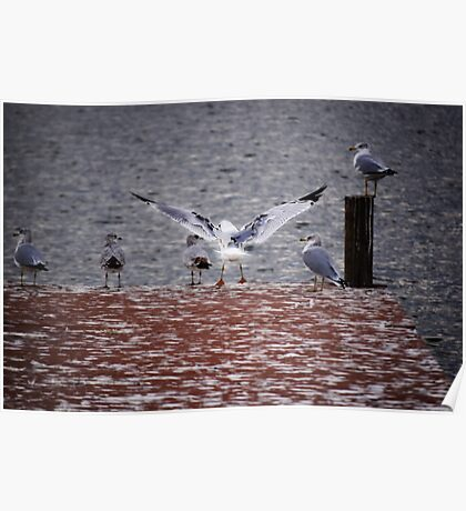 Gulls at the Pier Poster